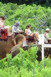Thailand Life Chakri Dynastie © B&N Tourismus