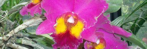 Thailand Life Blumen © B&N Tourismus